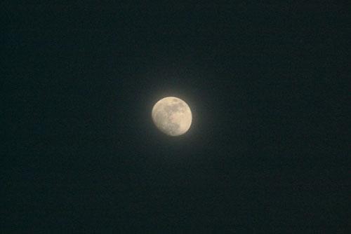 Nosila nas je luna